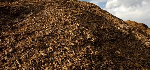 Aseguran que Misiones tiene más hectáreas forestadas para producir energía renovable por biomasa