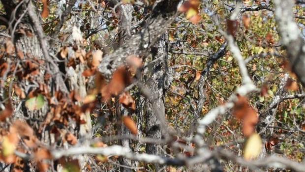 La foto que desvela a millones de personas: casi nadie puede ver al búho escondido entre los árboles