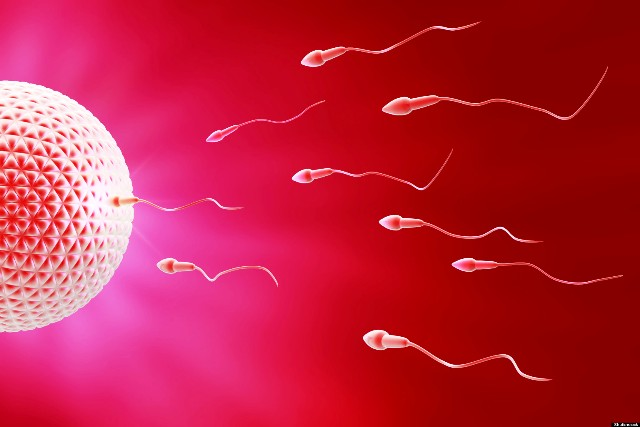 Tratamientos, apertura al diálogo y concientización: los principales avances en Fertilidad de los últimos 20 años