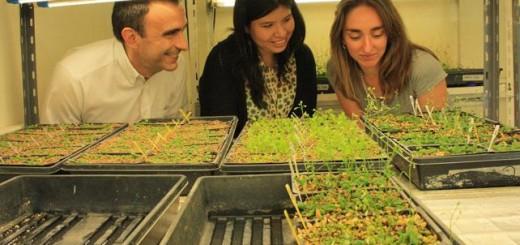 Graduada de Exactas participa en el equipo que descubrió el primer sensor de temperatura de las plantas