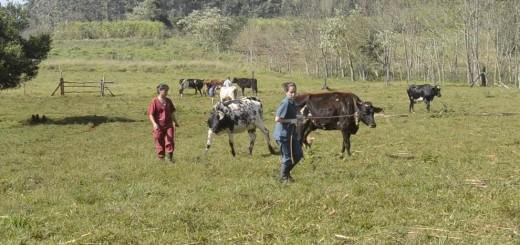 El 20 de octubre inicia el saneamiento oficial de la Cuenca lechera en Misiones