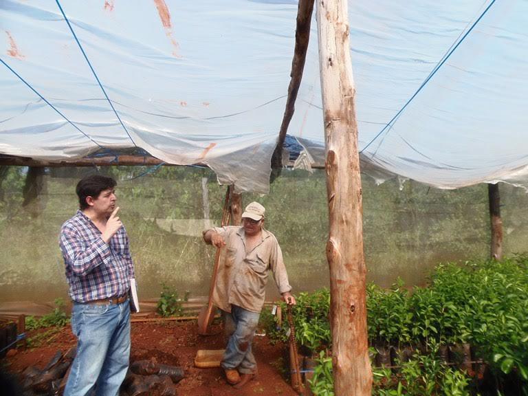 Cítricos: el HLB llegó a Corrientes