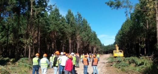 Las razones para invertir en la industria forestal de Corrientes serán analizadas hoy por expertos internacionales