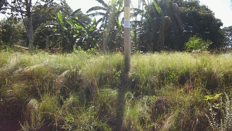 Dengue: Municipalidad de Posadas multó a 400 propietarios de baldíos