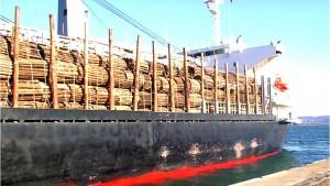 Interpol estimó que el costo anual de la corrupción forestal en el mundo es de US$ 29.000 millones