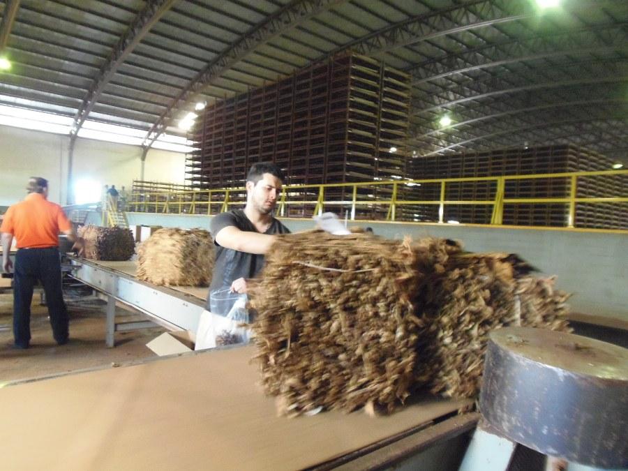 Casi 14 mil tabacaleros cobrarán hoy la Caja Verde