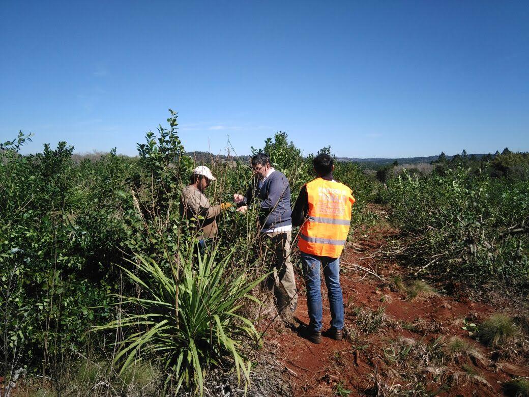 Más de 1.000 trabajadores rurales registrados en los últimos 6 meses por el RENATRE Misiones