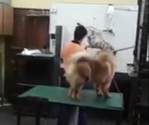 El video de la brutal agresión y el maltrato en una veterinaria de Encarnación