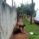 "El ataque de los pitbulls: ""A mi abuelo le van a tener que amputar la pierna"""