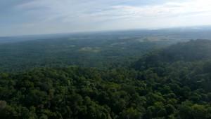 Los bosques deben conservarse para proteger millones de especies