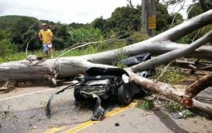 Accidente surrealista: un árbol cae sobre un coche en la BR-356 y mató al conductor en Ouro Preto