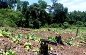 Argentina entre los diez países del planeta que perdieron mayor superficie de bosque en los últimos 25 años