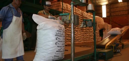 El Gobierno reestableció los reintegros a las exportaciones de yerba y té