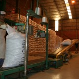 Yerbateros volvieron a pedir medidas para regular la oferta de hoja verde