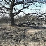 Incendios: Bergman responsabilizó a las provincias y a los productores y descartó su alejamiento del Ministerio de Ambiente