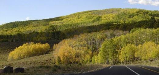 Área intacta del paisaje forestal mundial bajó en más de 7% en 13 años