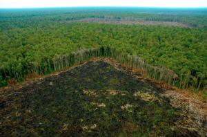 Restaurar los bosques y recuperar degradación de suelos generaría ganancias millonarias para América Latina, según estudio