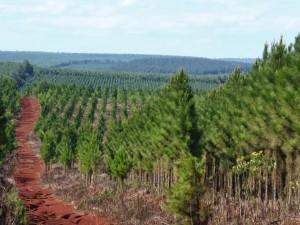 En 2016 pagaron más de 64 millones a planes forestales