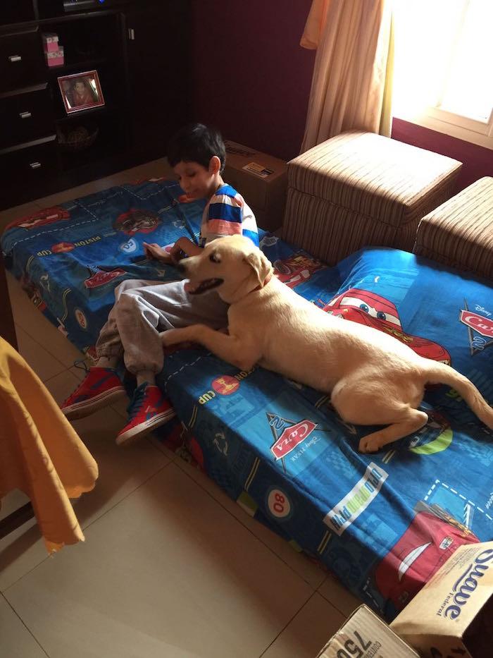 Garupá: Robaron a Emma, perra labradora de un nene con autismo