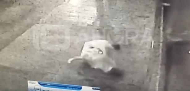 Video: Un hombre desnudo golpeó brutalmente a una mujer en una calle de Mar del Plata y quedó grabado