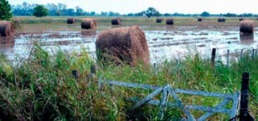 Declararon la emergencia agropecuaria en seis provincias