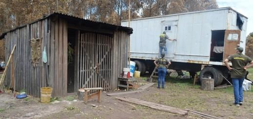 Cuatro Bocas, Corrientes: investigan si hay trata laboral en un establecimiento forestal