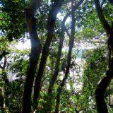 El ministerio de Ecología de Misiones presentó la actualización del ordenamiento de bosques nativos año 2017