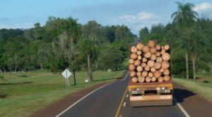 Pasado, presente y futuro de las exportaciones de industrias madereras de Misiones