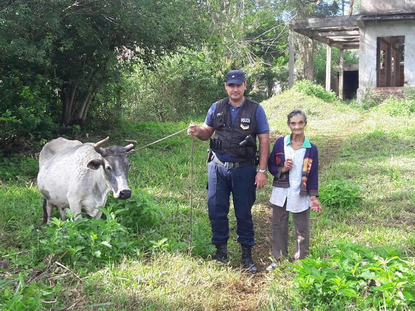 La Policía capturó a cuatrero cuando llevaba una vaca robada al matadero en El Soberbio