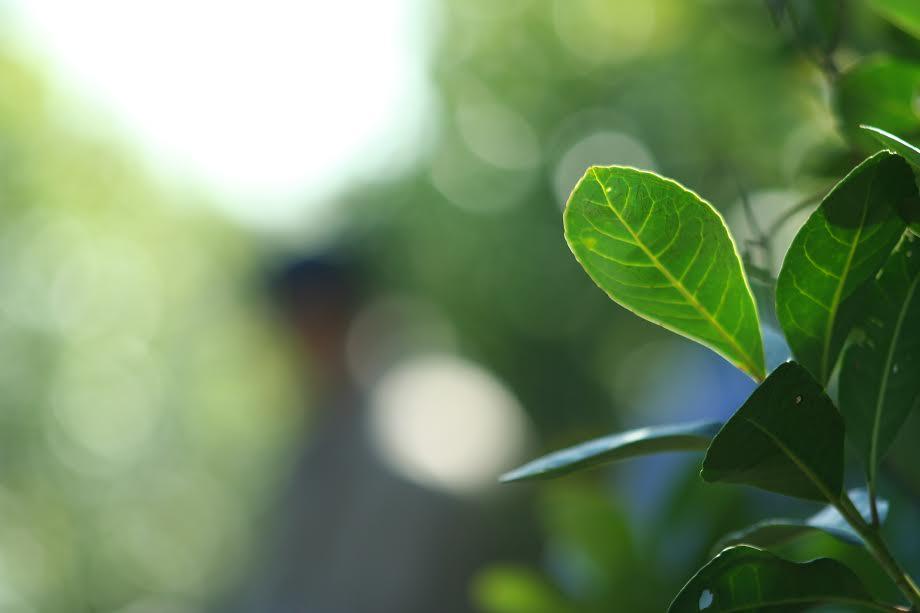INYM y CONICET ponen en marcha investigaciones sobre calidad, producción, salud y nuevos productos con yerba mate