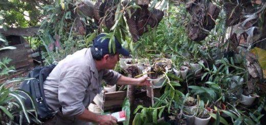 Febrero: se realizaron 17 operativos en los barrios de Posadas, Garupá y Candelaria para eliminar el Aedes