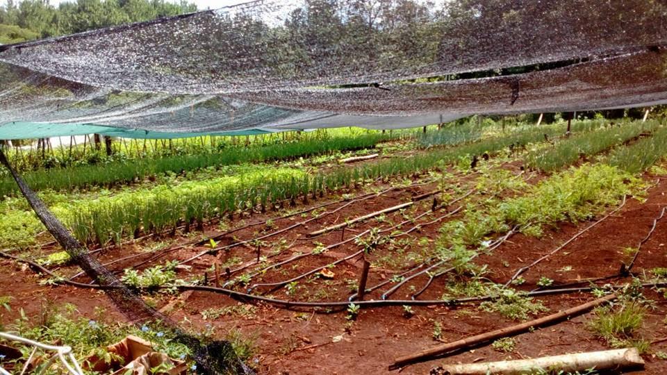 Realizarán un taller gratuito de huertas agroecológicas en el Cidade