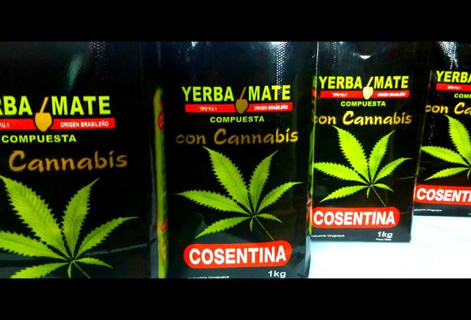 Salen a la venta dos marcas de yerba con cannabis