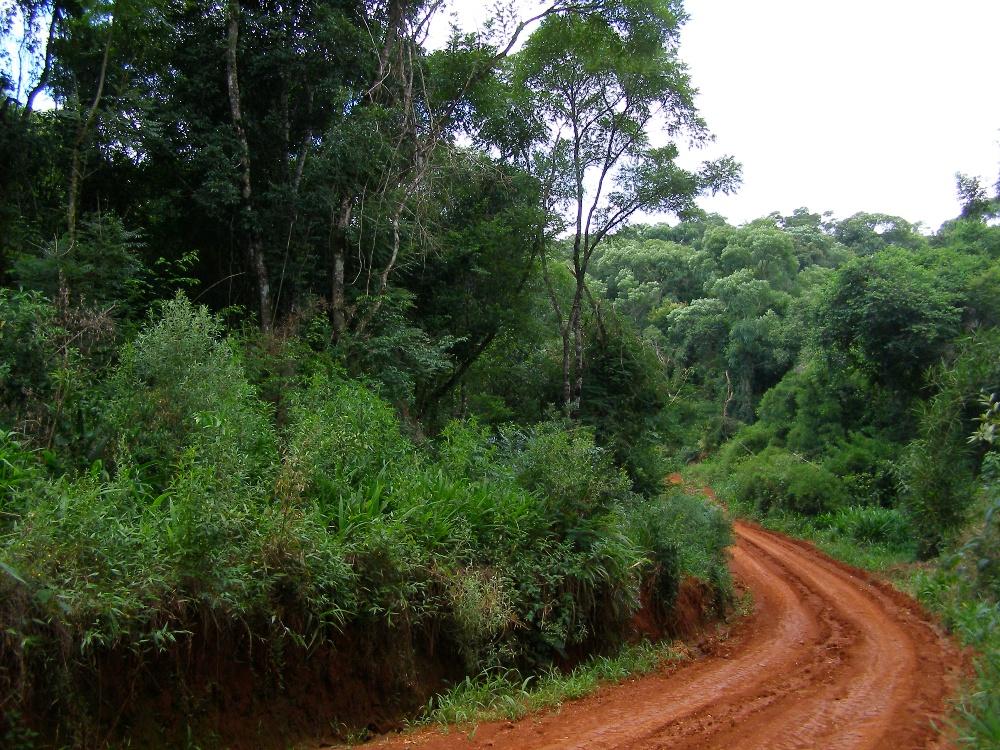 REDD+: Argentina avanzó en un estudio de costos y la Selva Paranaense ya tiene valor económico por hectárea en pie sobre la base del carbono