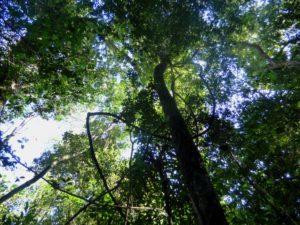Hay 9.600 especies de árboles que están en peligro de extinción en el mundo