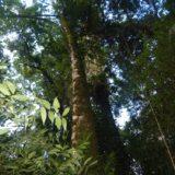 Naciones Unidas y la Nación abrieron el diálogo en Misiones para proyectos REDD en la región de la Selva Paranaense