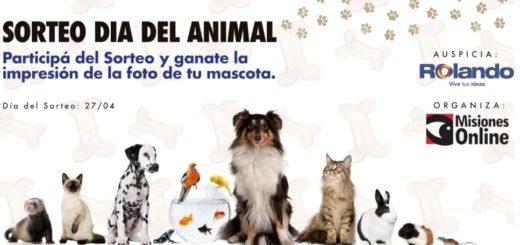 Por el Día del Animal, Misiones Online y Rolando mañana sortean la impresión de la foto de tu mascota
