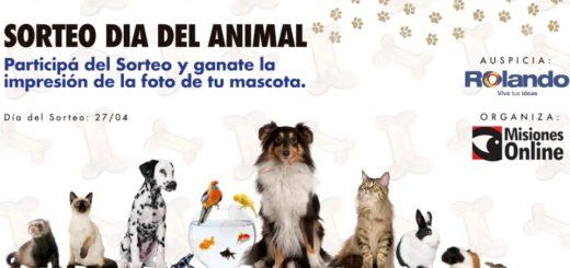 Por el Día del Animal, Misiones Online y Rolando tienen un sorteo muy especial: Ganate la impresión de la foto de tu mascota