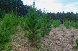 Closs va por la prórroga de la ley de promoción forestal argentina y un Plan de Competitividad foresto-industrial