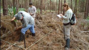 """Investigación del CONICET recomienda realizar plantaciones de pino con manejo sustentable y """"alejadas"""" de la selva misionera"""