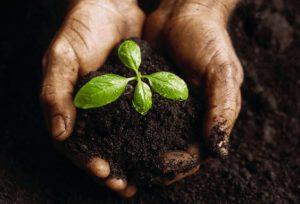La FAO advierte que al 2050 la humanidad rozará 10.000 millones de personas y la demanda alimentaria aumentará un 50%