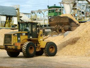 Corrientes y Misiones en el mapa de biomasa forestal que promueve la Nación para la generación de energías renovables