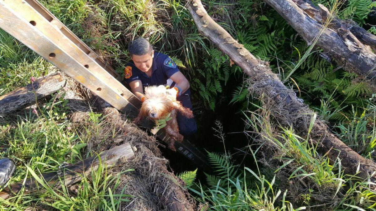 Despliegue de bomberos para rescatar a un perro y a un caballo que estaban en peligro