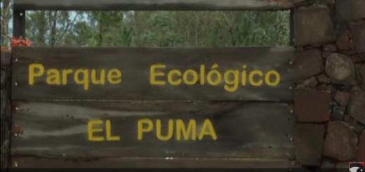 Ecología define los pasos a seguir para la liberación del puma atrapado en Cataratas