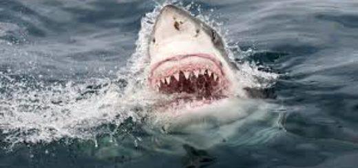 Un tiburón blanco mató a una adolescente mientras surfeaba junto a su padre