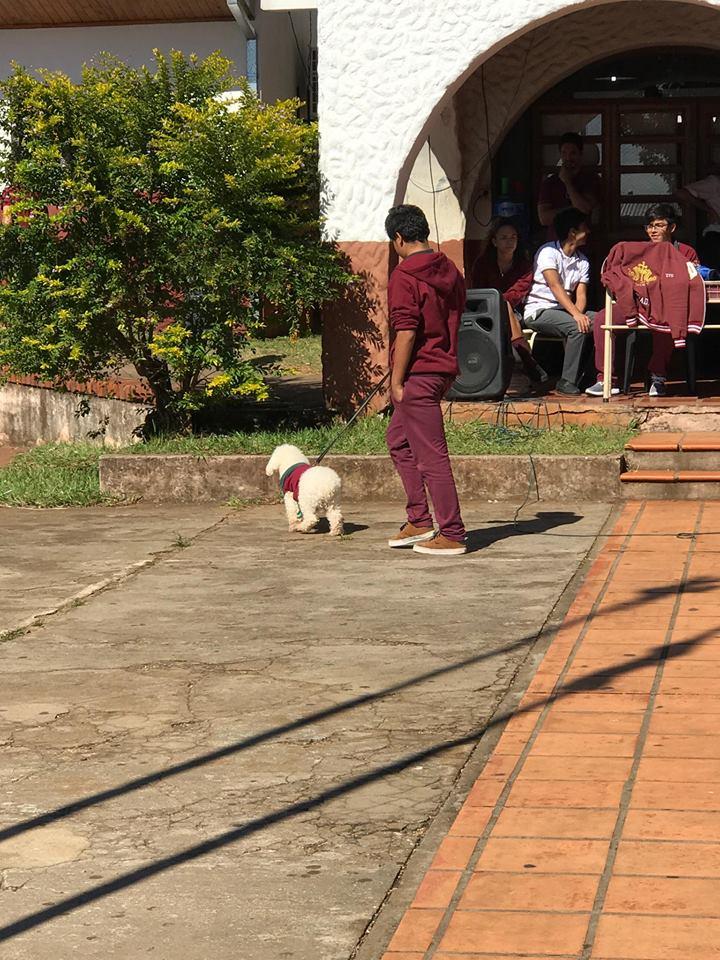 Fotos: El Colegio Madre de la Misericordia celebró el Día del Animal con desfile de mascotas y una donación