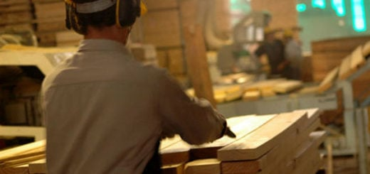 Closs presentó un proyecto de ley para crear un Plan de Competitividad con beneficios para los exportadores forestales