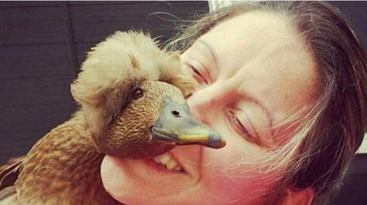 Puff, el pato rescatado que le salvó la vida a su dueña