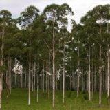 Corrientes tiene en carrera un segundo proyecto de inversión por US$ 40 millones en generación de energía con biomasa forestal en Santo Tomé