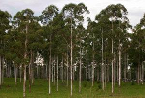 Grupo INSUD invertirá US$ 60 millones en Corrientes y construirá la mayor planta de generación de energía con biomasa forestal del país